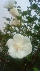 SAKI 公式ブログ/おはよう(*^_^*) 画像1