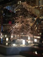 SAKI 公式ブログ/ミントビールと梅の木 画像2
