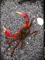 SAKI 公式ブログ/海釣り 画像1