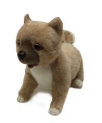 泉忠司 公式ブログ/あのイヌがついに 画像1