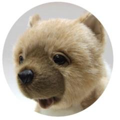 泉忠司 公式ブログ/あのイヌがついに 画像3