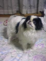 泉忠司 公式ブログ/お犬様 画像1