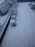 トリックマスターソラ バイオレット 公式ブログ/雪 関東 わんこも跳ねるね 画像2