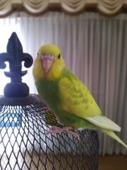 トリックマスターソラ バイオレット 公式ブログ/魔法鳥の個性  画像1