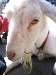 トリックマスターソラ バイオレット 公式ブログ/バラ&動物 画像2