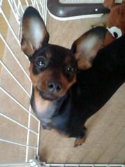 トリックマスターソラ バイオレット 公式ブログ/ソラ&魔法犬サンクス みな ありがとう☆ 画像1