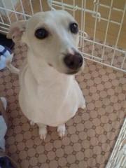 トリックマスターソラ バイオレット 公式ブログ/ソラ&魔法犬サンクス みな ありがとう☆ 画像2