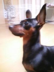 トリックマスターソラ バイオレット 公式ブログ/愛犬 画像3