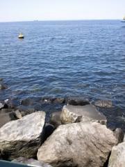 トリックマスターソラ バイオレット 公式ブログ/薔薇と海 ミニチュアピンシャー 画像3