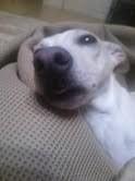 トリックマスターソラ バイオレット 公式ブログ/愛犬 画像2