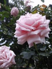 トリックマスターソラ バイオレット 公式ブログ/マザーテレサの言葉 響きますね 画像1