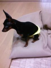 トリックマスターソラ バイオレット 公式ブログ/ソラのお気に入り娘★ 魔法犬 ピン子さん 画像1