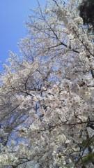 片岡あづさ 公式ブログ/お花見♪ 画像1