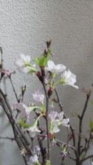 片岡あづさ 公式ブログ/お部屋に、 画像1