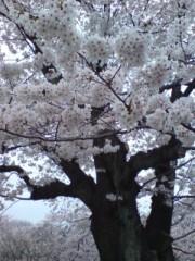 坂田陽子 公式ブログ/入学式☆ 画像2
