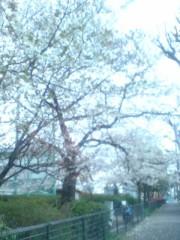 坂田陽子 公式ブログ/この桜吹雪が目に…入らないか。 画像2