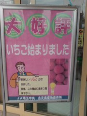 坂田陽子 公式ブログ/☆イチゴ狩り始めました☆ 画像1