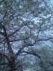 坂田陽子 公式ブログ/この桜吹雪が目に…入らないか。 画像3