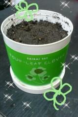 石堂優紀 公式ブログ/お部屋に植物があるって 画像1