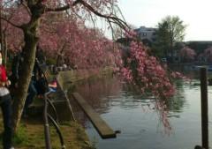 石堂優紀 公式ブログ/お花見 画像1