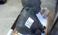 イワイガワ 公式ブログ/右肩の失礼 画像1