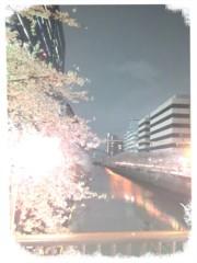 イワイガワ 公式ブログ/詫びの夜桜 画像1
