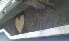 イワイガワ 公式ブログ/足元の心 画像1
