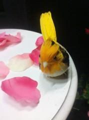 Tiara プライベート画像 81〜100件/Tiaraのアルバム Flowerツアー 番外編 4