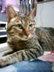 オーバービークル 公式ブログ/猫アレルギー 画像1