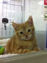 オーバービークル 公式ブログ/ペットを飼いたい 画像3