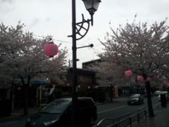 オーバービークル 公式ブログ/桜だね〜 画像1