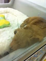 オーバービークル 公式ブログ/ペットを飼いたい 画像2
