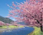 オーバービークル 公式ブログ/桜開花予想 画像3