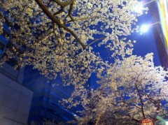オーバービークル 公式ブログ/夜桜 画像1