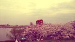 オーバービークル 公式ブログ/お花見。 画像1