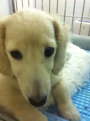 オーバービークル 公式ブログ/ペットを飼いたい 画像1