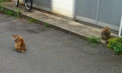 オーバービークル 公式ブログ/猫と 画像1