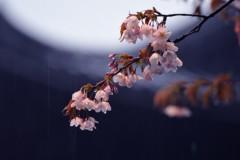 オーバービークル 公式ブログ/4月の雨 画像1