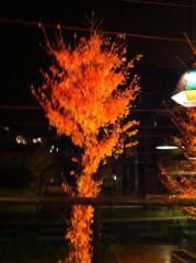 オーバービークル 公式ブログ/銀杏が綺麗 画像1