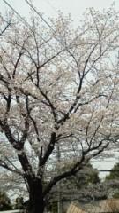 オーバービークル 公式ブログ/サクラ多摩にサク 画像1