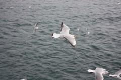菱刈健人 プライベート画像/〜旅の記録〜 ?7 船からの景色〜3〜