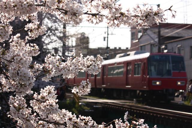 桜とコラボ♪♪