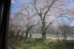 菱刈健人 プライベート画像/〜旅の記録〜 ?7 さくら号から桜