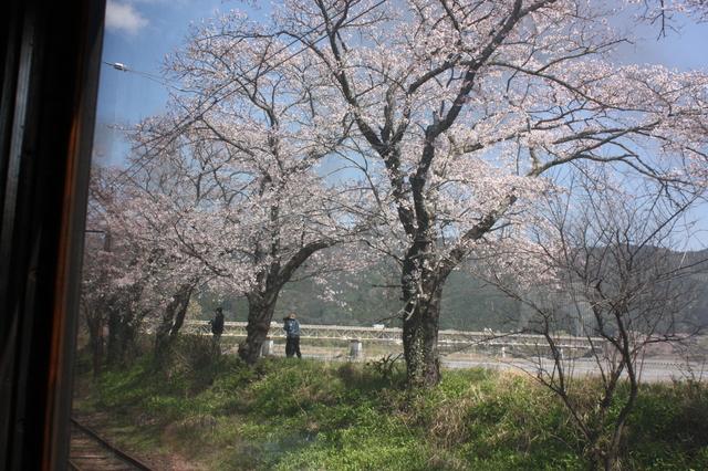 さくら号から桜