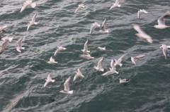 菱刈健人 プライベート画像/〜旅の記録〜 ?7 船からの景色〜2〜