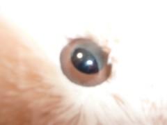 麻 友美 公式ブログ/おめめ・・・ 画像1