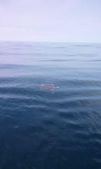 Asami(ナナカラット) 公式ブログ/漁船お届け道中★3日目 画像2