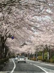 Asami(ナナカラット) 公式ブログ/桜がヤバイ 画像1