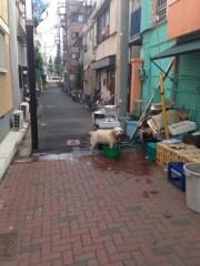 Asami(ナナカラット) 公式ブログ/あけて本日はミューザ川崎フリーライブ♪ 画像1