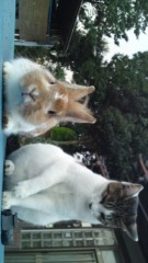 成嶋ミサキ 公式ブログ/ペットさん 画像1